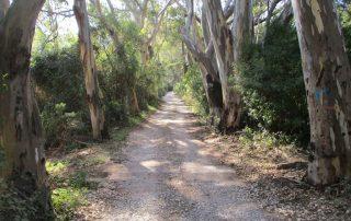 visita convento da arrabida setubal gruta santa margarida caminhando-9