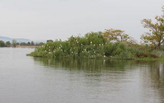 passeio barco escaroupim avieiros caminhando 14