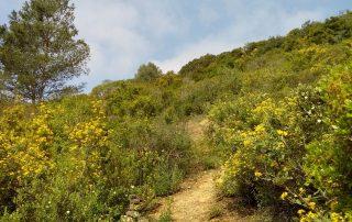 caminhada termas dos cucos azenhas torres vedras caminhando-26