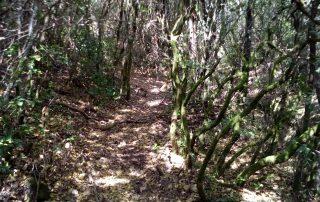 caminhada termas dos cucos azenhas torres vedras caminhando-7