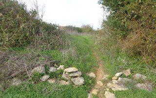 caminhada aldeia broas terrugem caminhando-13