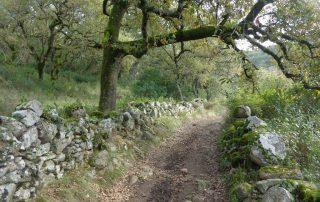 caminhada aldeia broas terrugem caminhando-5