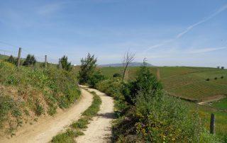 caminhada aldeias oeste merceana galega gavinha caminhando-13