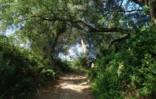 caminhada aldeias oeste merceana galega gavinha caminhando-9