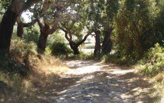 caminhada serra do socorro archeira caminhando-26
