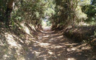 caminhada serra do socorro archeira caminhando-6
