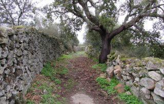 caminhada passeio aldeias historicas beira-baixa caminhando 1