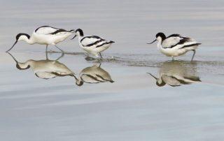 caminhada passeio observacao de aves evoa caminhando-12