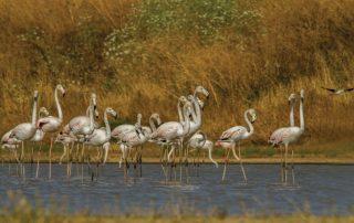 caminhada passeio observacao de aves evoa caminhando-15