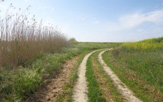 caminhada passeio observacao de aves evoa caminhando-2