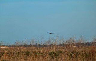 caminhada passeio observacao de aves evoa caminhando-6