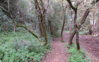 caminhada vale comenda serra arrabida setubal caminhando-11