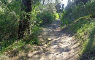 caminhada vale jamor lisboa caminhando 14