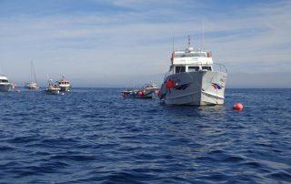 passeio barco visita ilha berlengas caminhando-5