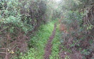 caminhada alqueidao sobral monte agraco caminhando 9