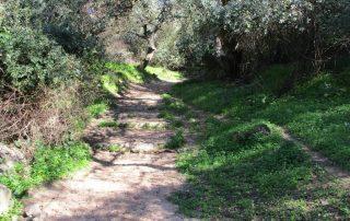 caminhada castanheira povos vfxira caminhando-2