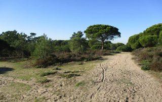 caminhada lagoa albufeira costa da caparica caminhando-14