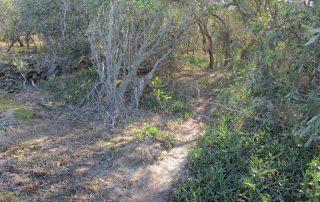 caminhada lagoa albufeira costa da caparica caminhando-16
