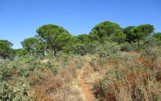 caminhada monte serves vialonga caminhando-10