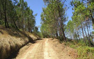caminhada monte serves vialonga caminhando-4