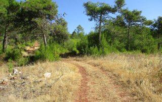 caminhada monte serves vialonga caminhando-7