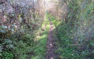 caminhada rota aldeias sintra caminhando-20