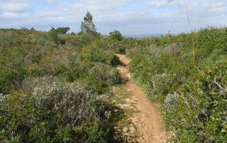caminhada arrabida terras do risco setubal caminhando-4