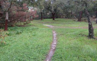 caminhada mata da machada barreiro caminhando-11