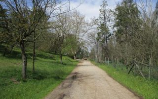 caminhada mata da machada barreiro caminhando-13