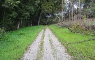 caminhada mata da machada barreiro caminhando-6