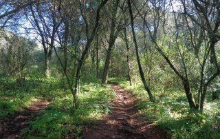 caminhada monsanto trilhos miradouros lisboa caminhando-12