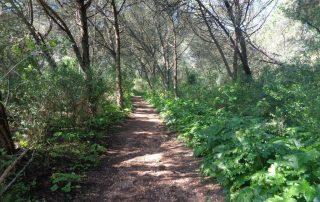 caminhada monsanto trilhos miradouros lisboa caminhando-17