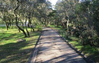 caminhada monsanto trilhos miradouros lisboa caminhando-3