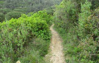 caminhada azenhas magoito serra de sintra caminhando-12