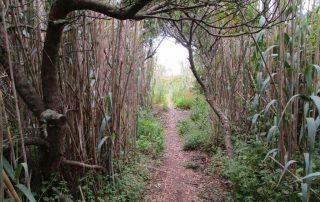 caminhada azenhas magoito serra de sintra caminhando-2