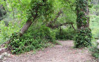 caminhada azenhas magoito serra de sintra caminhando-6