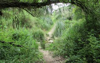 caminhada azenhas magoito serra de sintra caminhando-9