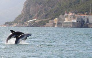 passeio observacao golfinhos sado arrabida caminhando-1