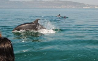 passeio observacao golfinhos sado arrabida caminhando-2