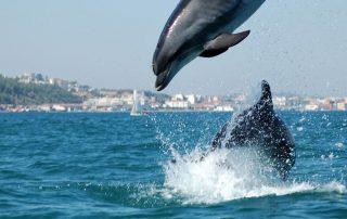 passeio observacao golfinhos sado arrabida caminhando-6