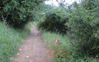caminhada sobral abelheira mafra caminhando-3