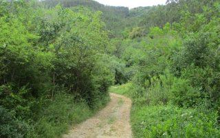 caminhada sobral abelheira mafra caminhando-6