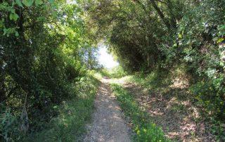 caminhada aniversário alhandra sao joao dos montes caminhando-1