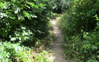 caminhada cascata fervenca anços caminhando-15