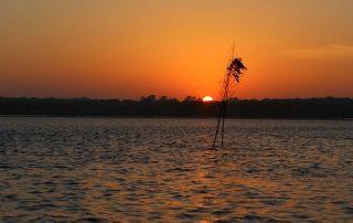 passeio de barco gambia estuario do sado caminhando-14