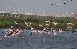 visita caminhada flamingos salinas samouco caminhando-26