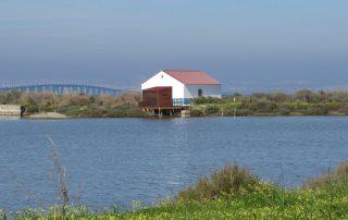 visita caminhada flamingos salinas samouco caminhando-17