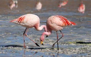 visita caminhada flamingos salinas samouco caminhando-21