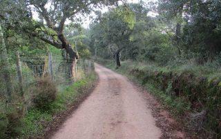 caminhada-arrabida-palmela-serra-caminhando-18