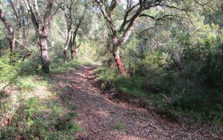 caminhada-arrabida-palmela-serra-caminhando-25